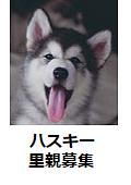 s-hasukii.png